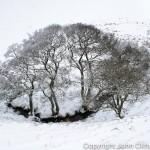 Winter Trees at Horcum Slack